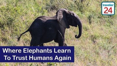 Maputo Special Reserve: Where Elephants Learn To Trust Humans Again