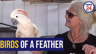 WATCH: Feathered friends - Joburger rescues 200 parrots