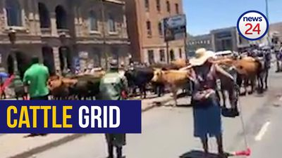 WATCH: Protesting Queenstown farmers use their cattle to block the roads