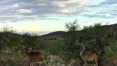 Sanbona family safari: A lesson in all manner of animal poop, they're unlikely to forget