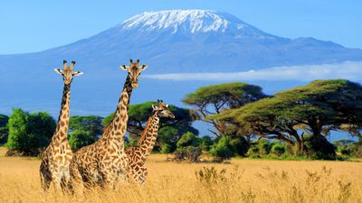 Quick Guide to Kenya