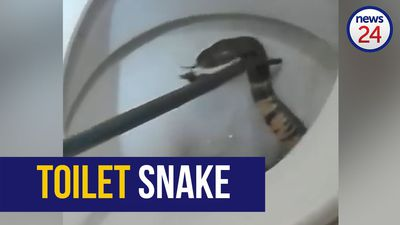 WATCH: Mozambique spitting cobra rears its head from North West toilet