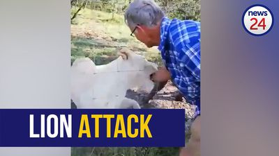 WATCH: 'He's biting him! Man in hospital after lion attack at Free State Lodge