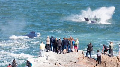 Hermanus: A winter, whale-watching escape