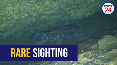 WATCH: Rare coelacanth filmed off Sodwana coast
