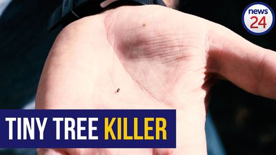 WATCH: An invasive beetle is killing SA's trees - here's how to spot the signs