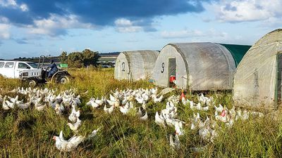 The journey of an egg: Regenerative farming with Farmer Angus
