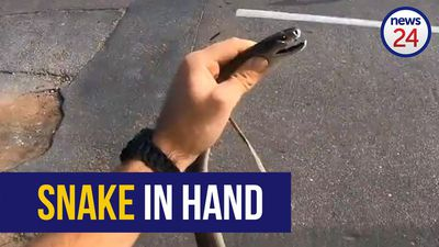 WATCH: Black mamba captured after snake fight at KZN office park
