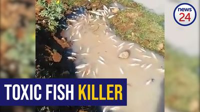 WATCH: Video shows dead fish floating on Duzi river after toxic spill