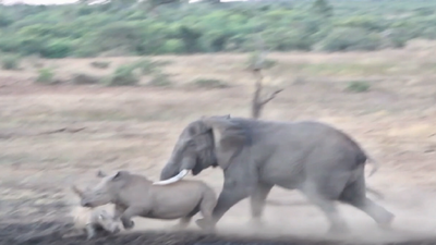 Latest sightings: Baby rhino trampled as elephant takes on its mom at local waterhole