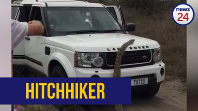 WATCH | Python slithers onto Land Rover traveling through Mozambique