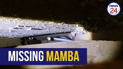 WATCH | 2 4m mamba removed from ceiling of Verulam home