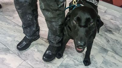 Meet Cape Town Airport's explosive-sniffing expert Jane the dog