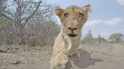 Latest Sightings: How wild animals react to a camera