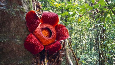 The world's weirdest plants and where to find them