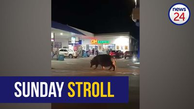 WATCH | Happy hippo makes a pit stop at petrol station in St Lucia