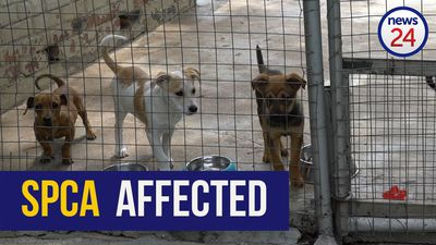 WATCH | Sandton SPCA calls for donations to continue their work during Covid-19 lockdown