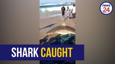 WATCH | Shark caught in fishing net at the start of the annual sardine run along KZN south coast