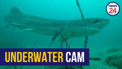 WATCH   Fishing community helps capture footage of marine life with special underwater cameras