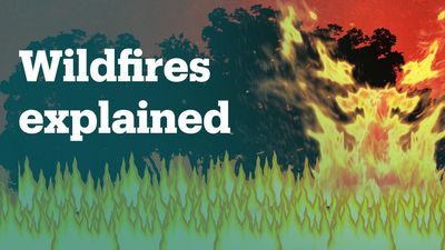 How do wildfires spread?
