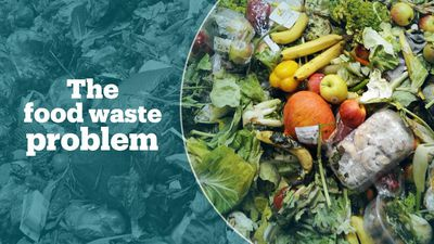 The world's food waste problem