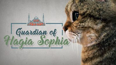 Meet the cat that guards the Hagia Sophia