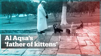 Meet 'the father of kittens' who feeds the animals at Al Aqsa Mosque