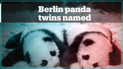 Berlin's new panda twins receive their names