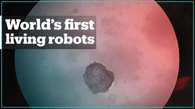 World's first living robots created from frog stem cells