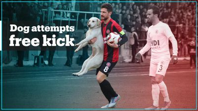 Dog just wants to take a free kick