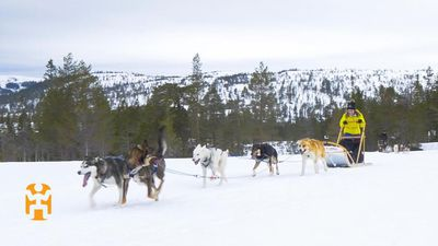 Norway Discoveries - Dog Sledding
