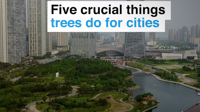 Five things trees do for cities