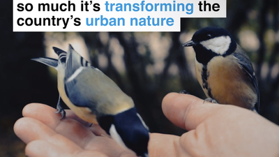 The British love feeding birds so much it's transforming the country's urban nature
