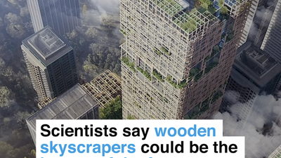 Scientists say wooden skyscrapers could be the homes of the future