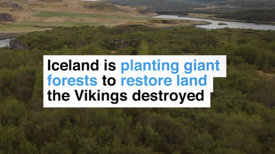 Iceland is planting giant forests to restore land the Vikings destroyed