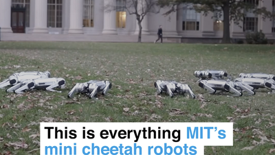 This is everything MIT's mini cheetah robots can do