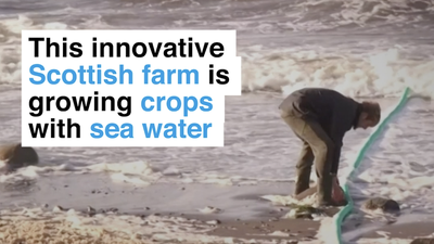 This innovative Scottish farm is growing crops in salty sea water