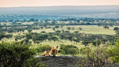The Top 5 Wildlife Destinations In Africa