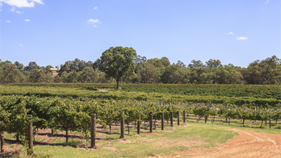 The Top Best 5 Things To Do In Western Australia's Swan Valley!