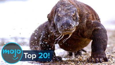 Top 20 Greatest Animal Predators