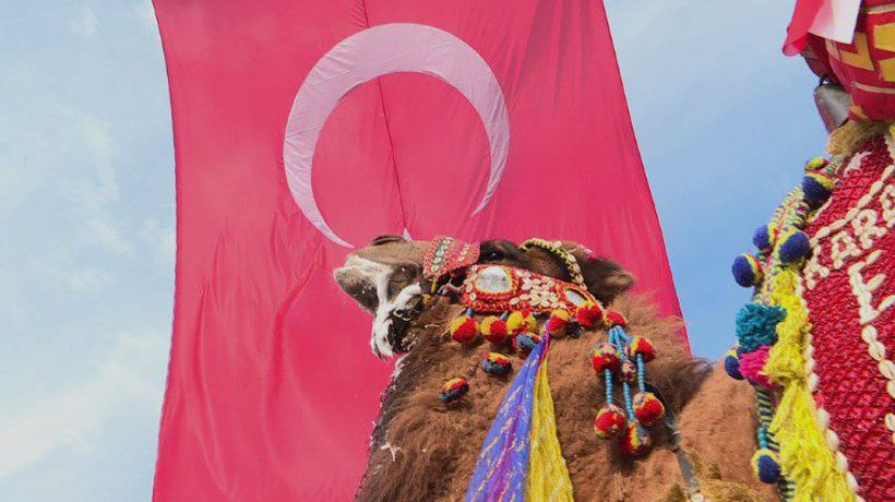 Into the arena for camel wrestling in Turkey