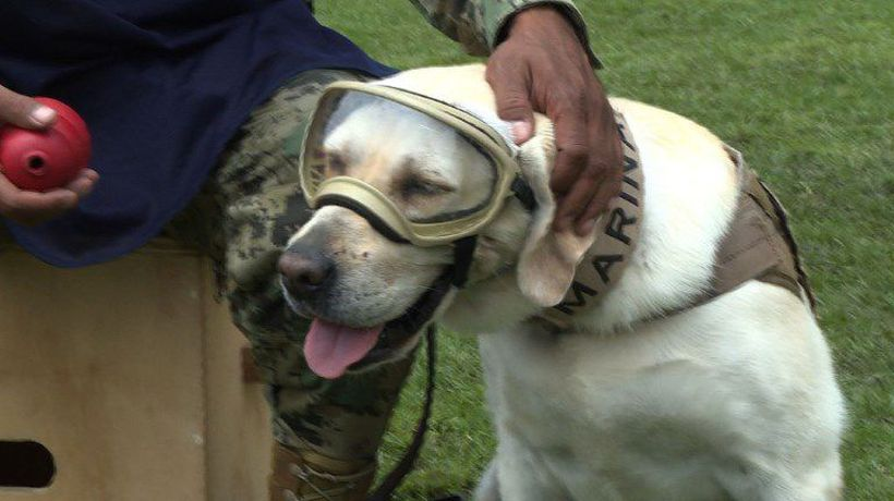 Frida the rescue dog retires in Mexico