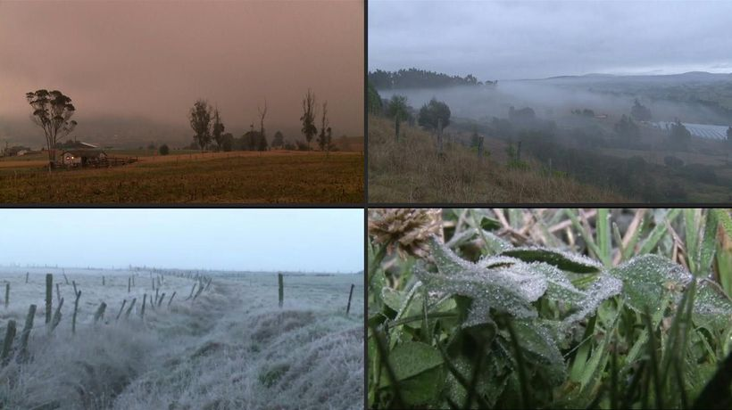 Tough weather kills 48,000ha crops in central Colombia