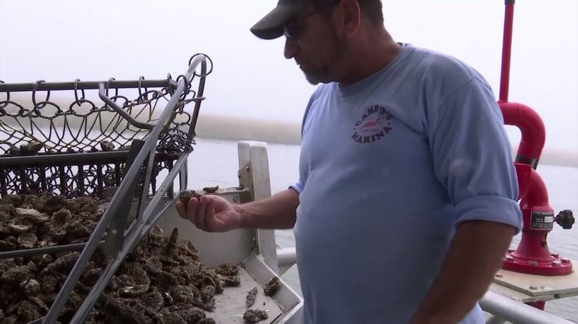Floodwaters killing oysters, pushing out sea life