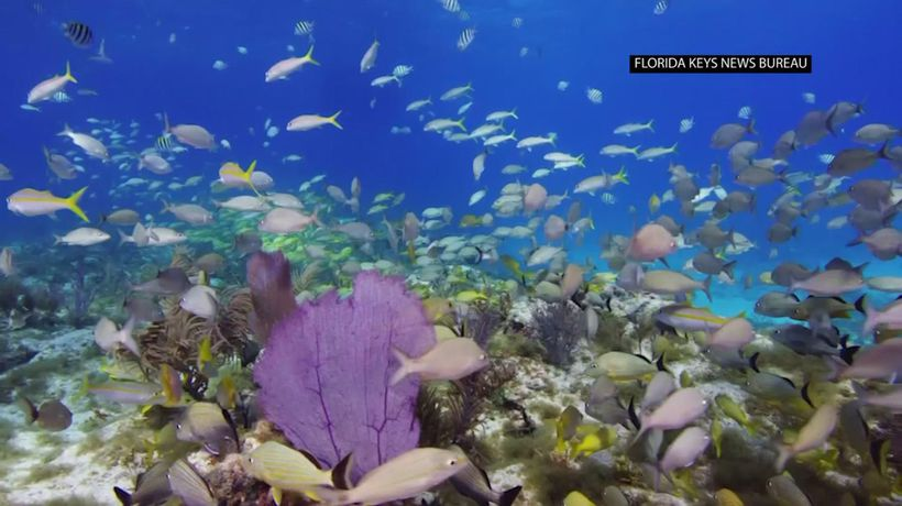 Officials want $100M for reef restoration