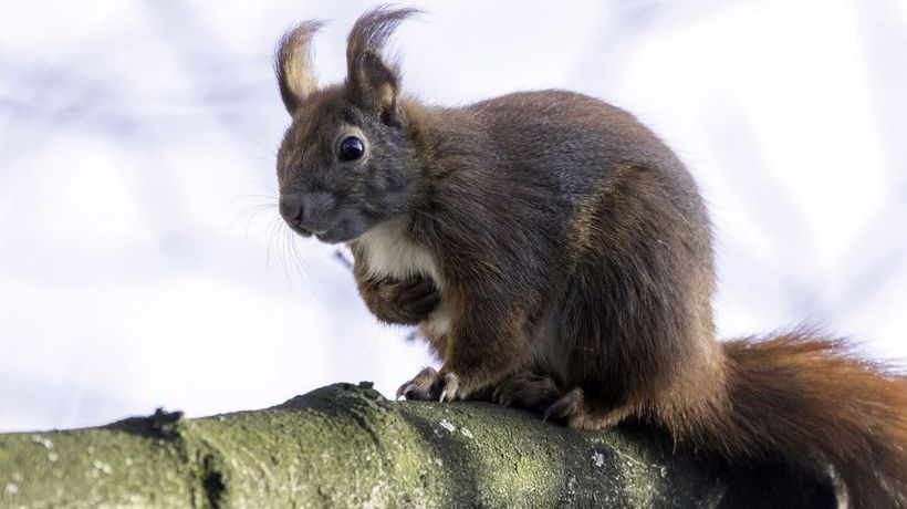 Dog walker shocked by well-hung squirrel