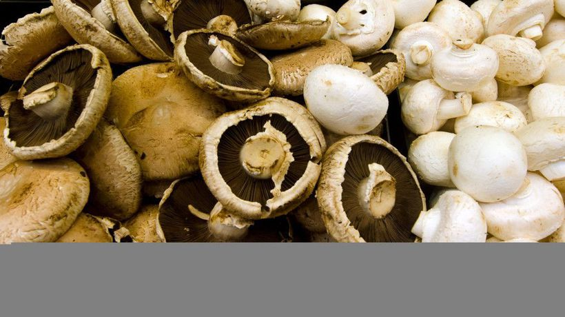 Mushrooms could save the planet