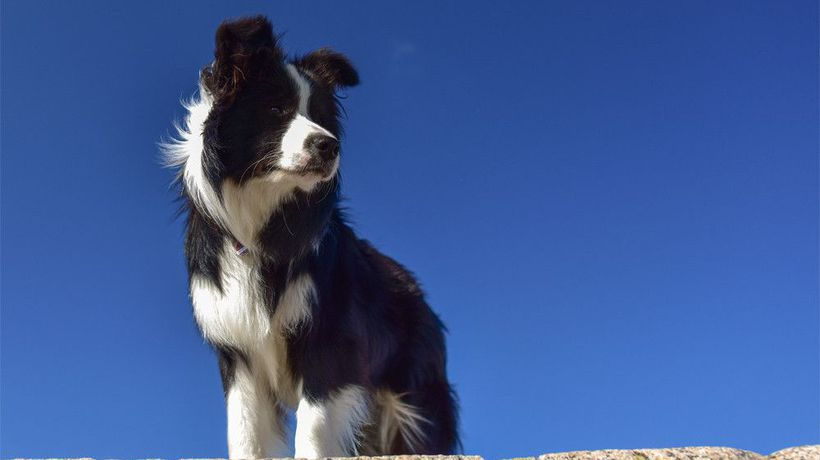 Dogs are capable of recalling names for months