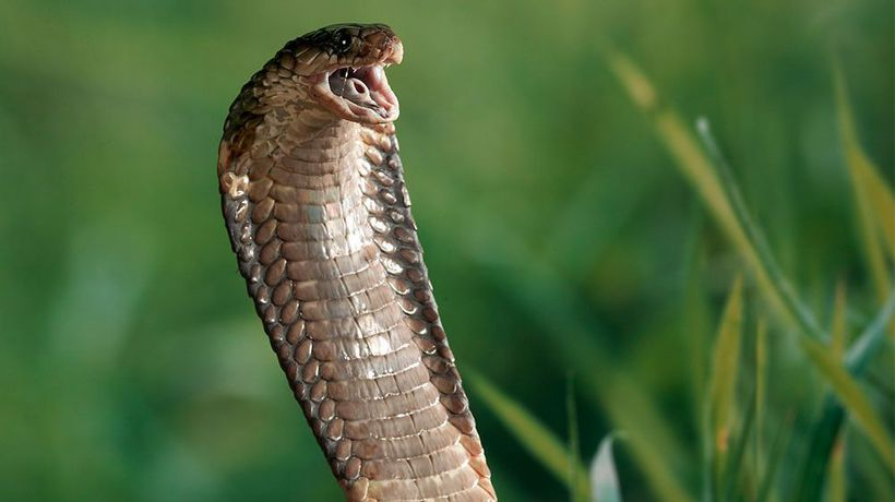 Woman petrified after finding snake in her toilet