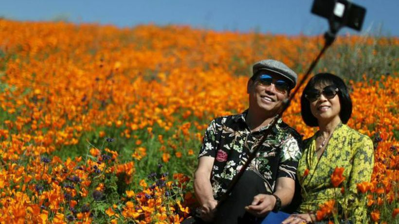 Rare super bloom stuns visitors